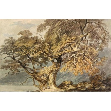 A Great Tree 1796 by Joseph Mallord William Turner -Art gallery oil painting reproductions