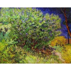 Lilac Bush by Vincent Van Gogh- Art gallery oil painting reproductions