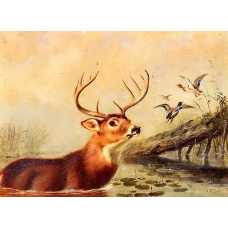 Buck in a Marsh By Arthur Fitzwilliam Tait - Art gallery oil painting reproductions