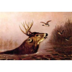 Deer in Marsh By Arthur Fitzwilliam Tait - Art gallery oil painting reproductions