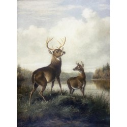 Buck and Doe By Arthur Fitzwilliam Tait - Art gallery oil painting reproductions