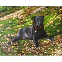 Dog Oil Painting 3 - Art Gallery Oil Painting Reproductions